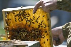 Bienenwabe Lizenzfreies Stockbild
