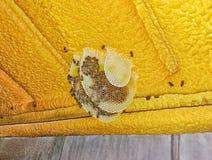 Bienenwabe auf dem Dach Stockbilder