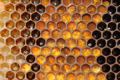 Bienenwabe gebräuchlich stockbilder
