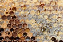 Bienenwabe gebräuchlich lizenzfreies stockfoto