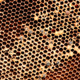 Bienenwabe gefüllt mit Honig Stockfotos