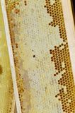 Bienenwabe im Holzrahmen Stockbilder