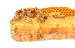 Bienenwabe mit Bienen Lizenzfreie Stockfotografie