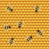Bienenwabe mit Bienen Stockfoto