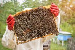 Bienenwabe mit Bienen und Honig Stockbilder