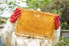 Bienenwabe mit Bienen und Honig Lizenzfreie Stockfotografie