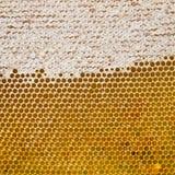 Bienenwabe mit frischem Honig Lizenzfreies Stockbild