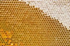 Bienenwabe mit frischen Honig und dem Blütenstaub Lizenzfreies Stockfoto