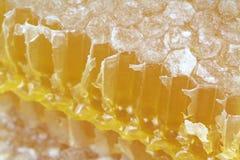 Bienenwabe mit Makrobildern stockfotografie