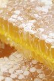 Bienenwabe mit Makrobildern stockfotos