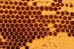 Bienenwabe - Nahaufnahme V stockfoto