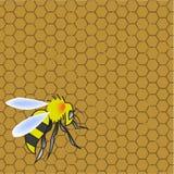 Bienenwabe und Wespe Stockbilder