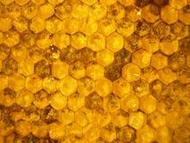 Bienenwaben 1 Lizenzfreie Stockfotos