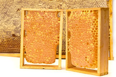 Bienenwaben Stockfoto