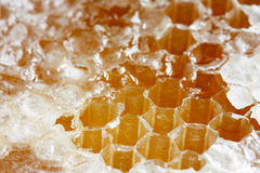 Bienenwaben Lizenzfreie Stockbilder