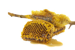 Bienenwaben in der Nahaufnahme stockfotos