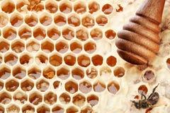 Bienenwaben und hölzerner Steuerknüppel. lizenzfreie stockbilder