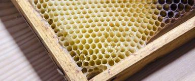 Bienenwabenmusterhintergrund Stockfotografie