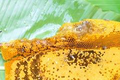 Bienenwabennahaufnahme im natürlichen Lizenzfreies Stockbild