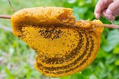 Bienenwabennahaufnahme mit der Hand im natürlichen Lizenzfreies Stockbild