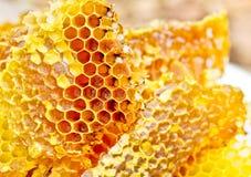 Bienenwabewachs stockfoto