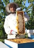 Bienenzucht Lizenzfreies Stockfoto