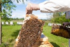 Bienenzucht Stockfotografie