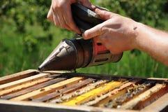 Bienenzucht lizenzfreie stockbilder