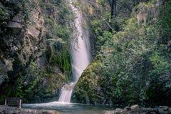 Bienvenue à la jungle photographie stock libre de droits
