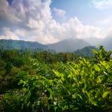 Bienvenue à la jungle photos stock
