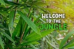 Bienvenue à la jungle E Photographie stock libre de droits