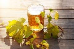 Bier Überfallen Sie mit Bier und Hopfen auf Sonnenuntergangsommer-Herbsthintergrund Stockbild