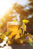 Bier Überfallen Sie mit Bier und Hopfen auf Sonnenuntergangsommer-Herbsthintergrund Lizenzfreie Stockfotografie