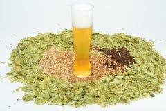 Bier in glas met korrel en hop royalty-vrije stock foto's