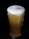 Bier mit Kopf Stockfotografie