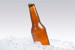 Bier op ijs Stock Foto's