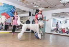 Bier-Sheva, ISRAËL - Poedel die door hoepels en clowns 25 Juli, 2015 springen Stock Afbeeldingen