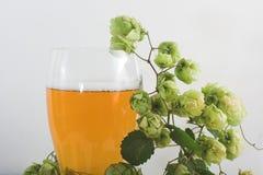 Bier und Hopfen Stockfoto