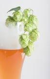 Bier und Hopfen Stockbild