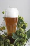 Bier und Hopfen Lizenzfreies Stockfoto