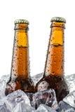 Bieren op ijs Stock Foto's