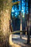 Bierflasche in einem Kiefernwald Stockbilder