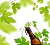 Bierflasche und Hopfen lizenzfreie stockfotos