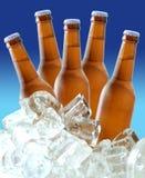 Bierflaschen auf Eis Stockbilder