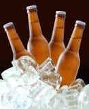 Bierflaschen auf Eis Stockbild