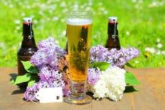 Bierflessen en bierglas op een rij, vader` s dag, exemplaarruimte Royalty-vrije Stock Fotografie