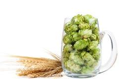 Bierglas mit Hopfen und den Ohren des Kornes Lizenzfreies Stockfoto