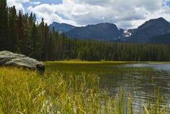bierstadt湖用茅草盖海岸线 免版税图库摄影