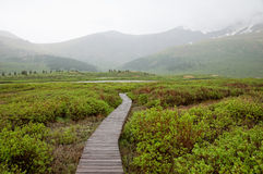 Bierstadt Mountain Trail Royalty Free Stock Images