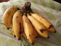 Bierze bananowi dzień, Utrzymuje lekarkę Oddalona, Fotografia Stock